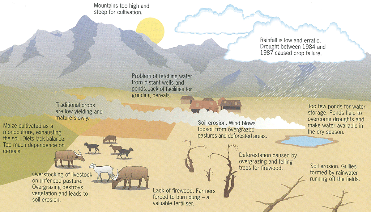 what is desertification